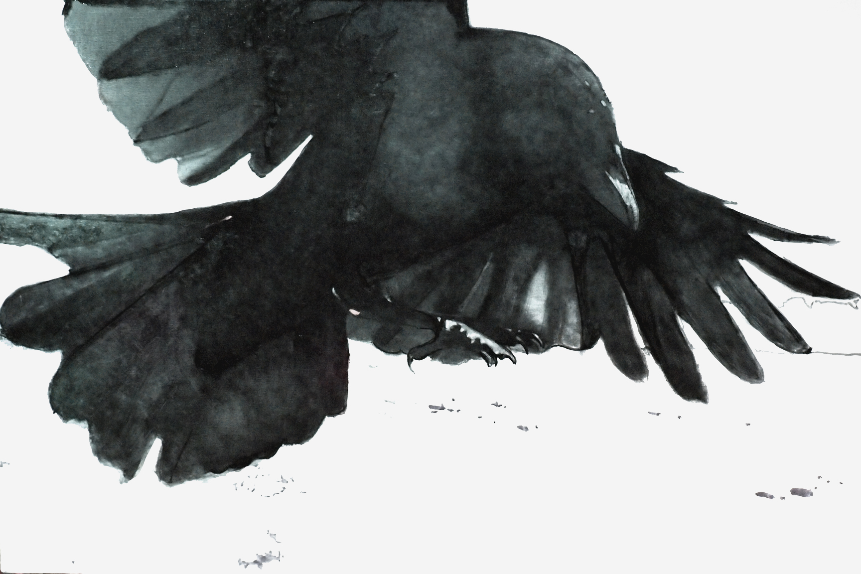 Crow In Flight Paintin...