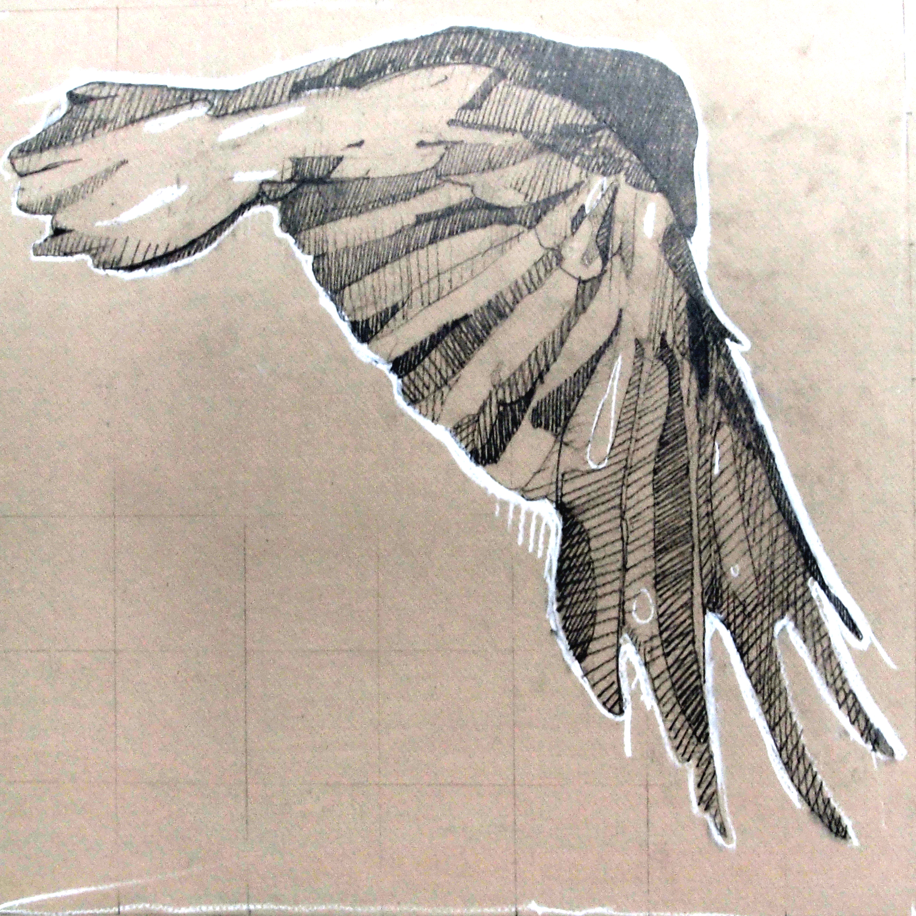 Crow Study, 14 x 14, graphit and chalk on board