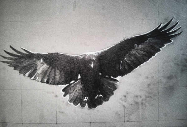Superlative Raven, graphite and Conte on Canson, 12 x 18, in progress